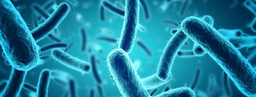 Die Zilien fangen in unserem Hals Bakterien ab und transportieren sie durch das Atmen oder Husten aus unserem Körper.
